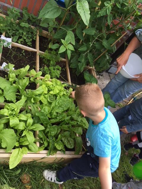 Peuteropvang De Wigwam, Beijum smakelijke moestuinen Groningen - Kids First COP groep