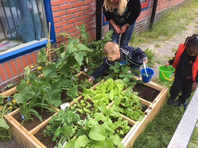 Smakelijke moestuinen bij peuteropvang, kinderdagverblijf en buitenschoolse opvang Kids First COP groep Groningen
